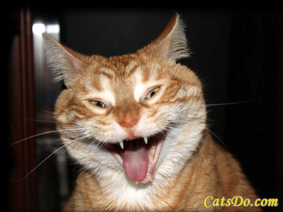 funny cats laughing