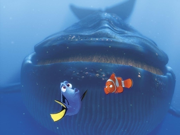 Can You Speak Whale? The Science of Whale Song