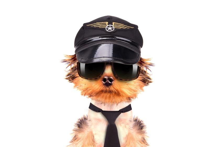 Funny dog dressed as pilot