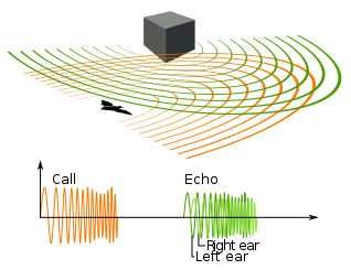 Echolocation diagram