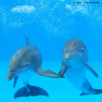 Friendly funny dolphins