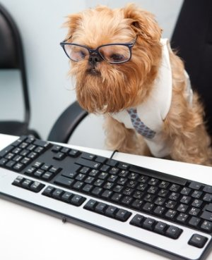 dog at computer with glasses