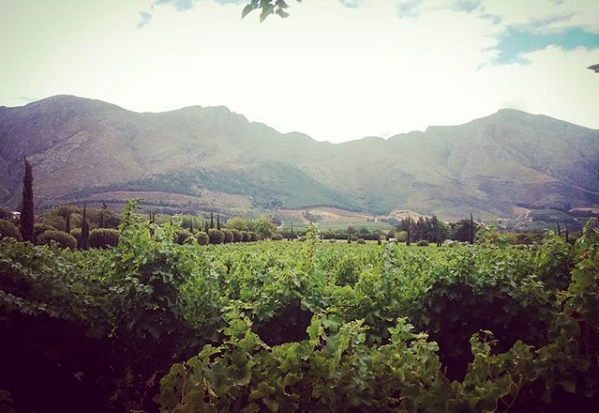 South African Winelands
