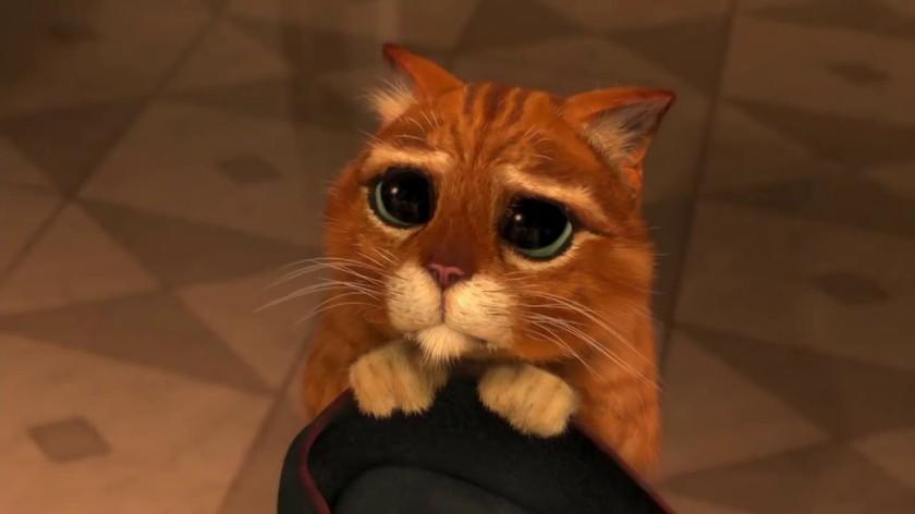 cat Shrek sad eyes