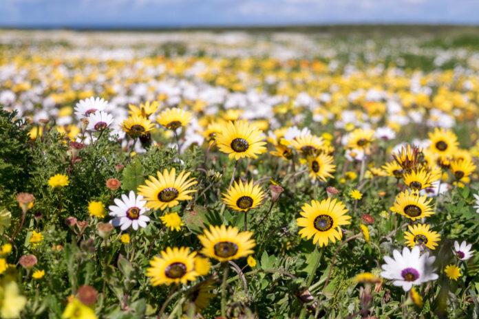 Tienie-Versfeld-Wildflower-Reserve