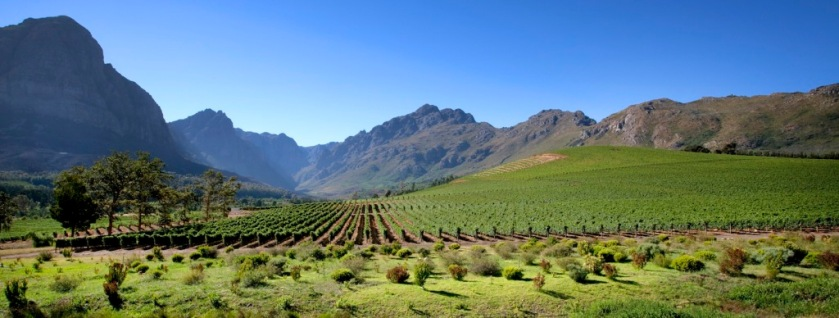 Oldenburg Vineyards Stellenbosch Rondekop