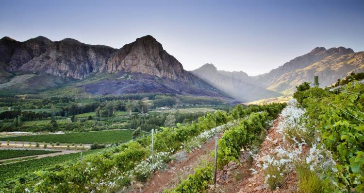 Oldenburg Vineyards: a must-add to any boozy Stellenbosch itinerary